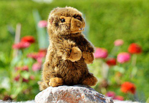Beaver, Stuffed Animal, Toys, Soft Toy, Teddy Bear