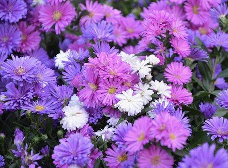 Flower, Flowers, White Flowers, Violet Purple