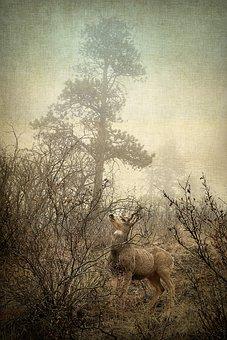 Deer, Nature, Wild, Fauna, Animals
