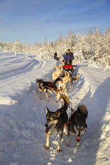 Husky, Sleigh Ride, Husky Tour, Winter, Snow, Finland