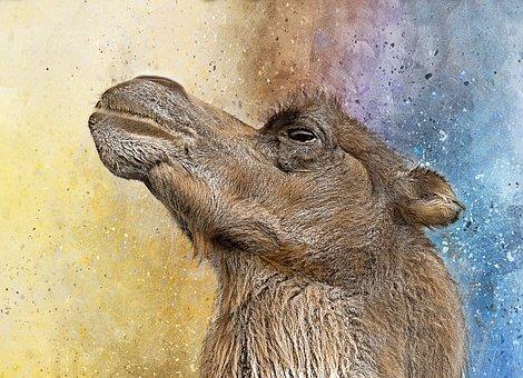 Camel, Sahara, Animal, Heat, Brown, Desert, Zoo