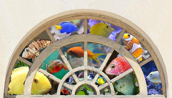 Window, Round Arch, Seedlings, Wood, Discs, Broken