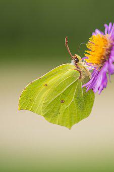 Butterfly, Macro, Nature, Bug, Garden, Insects, Summer