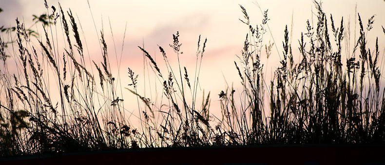 Sunset, Contour, Shadow, Meadow, Evening, Silhouette