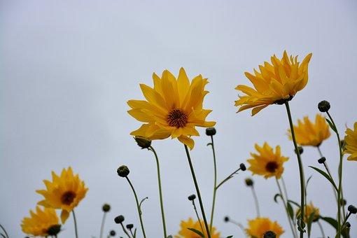 Flower, Yellow Flowers, Stems, Buds, Flowered