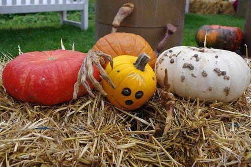 Pumpkin, Halloween, Autumn, Nature, Faces, Orange, Deco