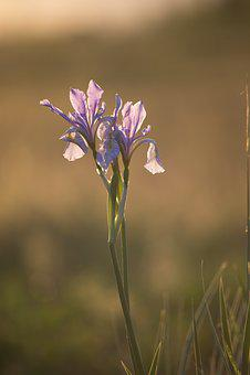 Happy, Landscape, Farm, Nature, Field, Summer, Iris