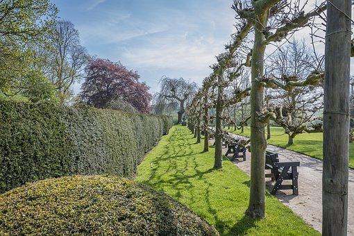 Landscape, Trees, Hedging, Plant, Lawn, Gardening