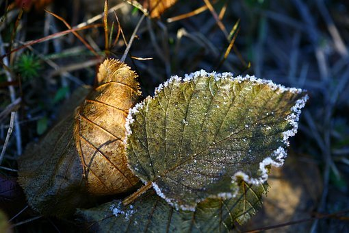 Autumn, The First Frost, Leann, Fallen Foliage, Ice