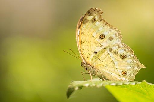 Butterfly, Macro, Nature, Bug, Garden, Summer, Wings