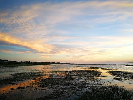 New York, South Hampton, Wetlands, Swamp, Sunset