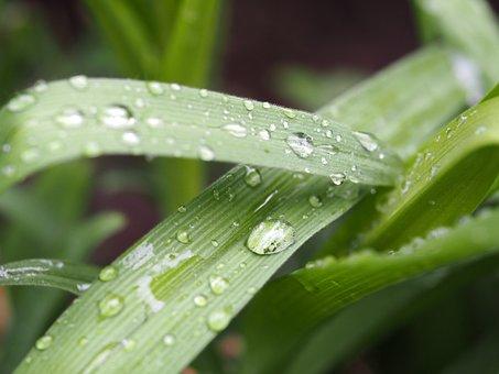 Drop Of Water, Reflection, Drip, Water, Raindrop