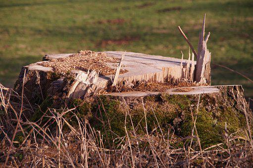 Tree Stump, Tree, Sawed Off, Wood, Splitter, Forest