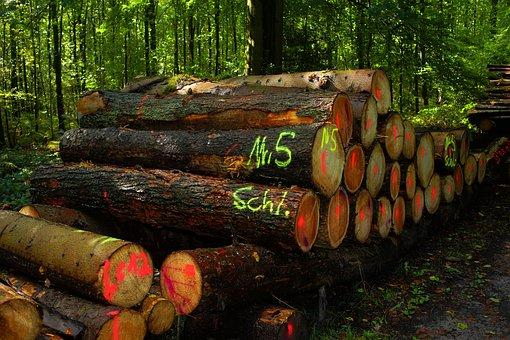 Forest, Wood Pile, Strains, Wood, Money, Marketing
