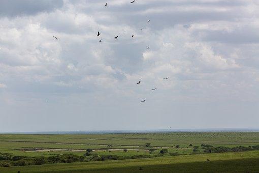 Birds, Ngorongoro Conservation Area, Tanzania