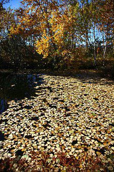 Autumn, Fallen Leaves, Lake, Water, Puddle