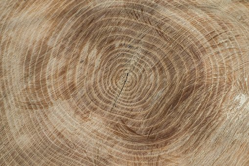 Wood, Texture, Wood Texture, Background, Structure