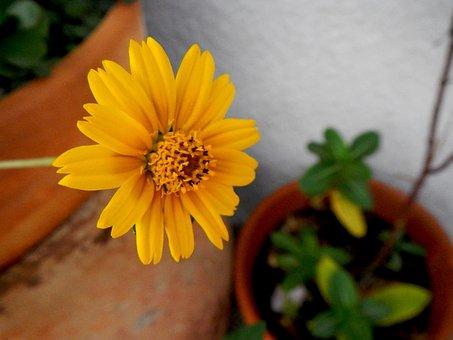 Yellow Flower, Garden, Yellow, Wild, Petals, Nature
