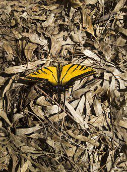 Butterfly, Dried Leaves, Autumn