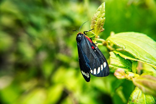 Butterfly, Moth, Insects, Macro, Microphotographing