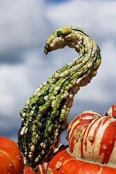 Pumpkins, Decorative Squashes, Autumn, Decoration