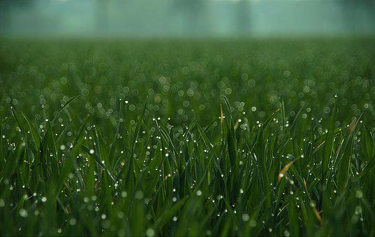 Grass, Drip, Meadow, Close, Green, Drop Of Water
