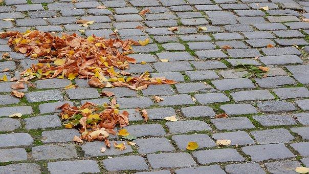 Fallen Leaves On The Sidewalk, Autumn Leaves