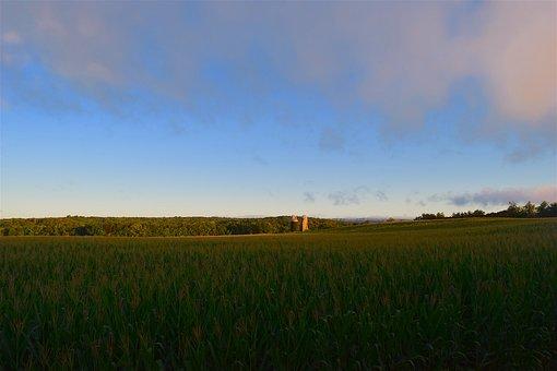 Corn Field, Sunrise, Green, Clouds, Farm, Landscape
