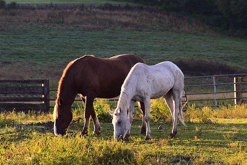 Horses, Sunrise, Grass, Farm, Landscape, Field, Summer