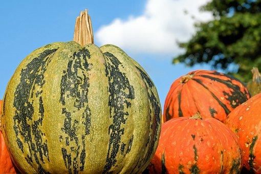 Pumpkin, Fig Leaf Gourd, Cucurbita Ficifolia, Cayote