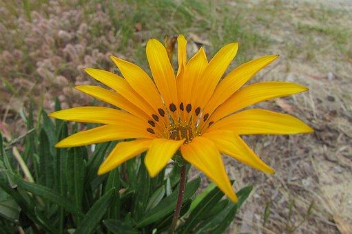 Yellow, Flower, Natural, Street, Nature, Fresh