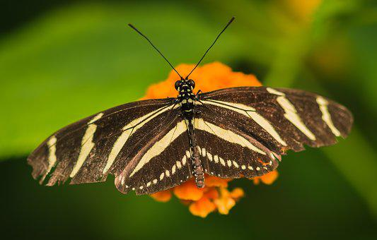 Bug, Butterfly, Nature, Garden, Flower, Insects, Summer