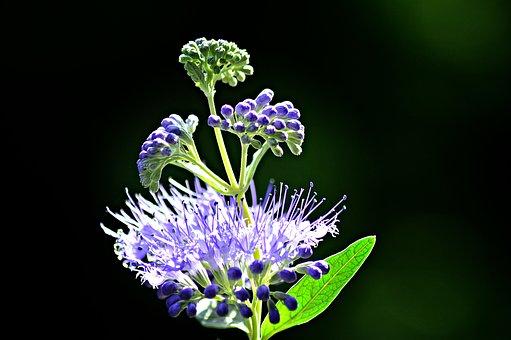 Flower, Garden, Flowers, Plant, Summer Plants