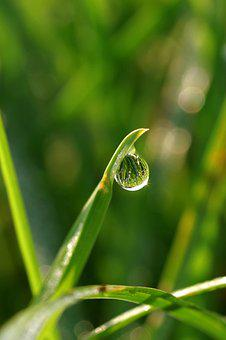 A Drop Of, Water, Grass, Green, Macro, Zoom