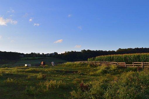 Field, Sunrise, Horses, Green, Clouds, Farm, Landscape