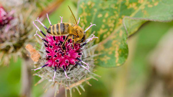 Bee, Summer, Natural, Pollination, Flowers, Insect