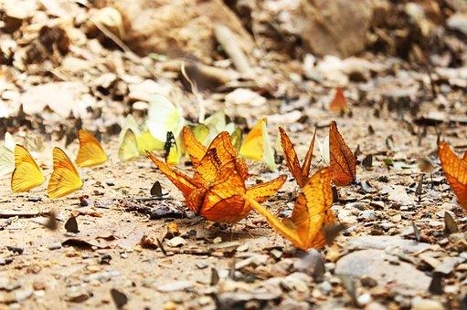 Butterfly, The National Park, Nature, Kaeng Krachan