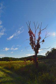 Tree, Morning, Nature, Field, Landscape, Light, Season