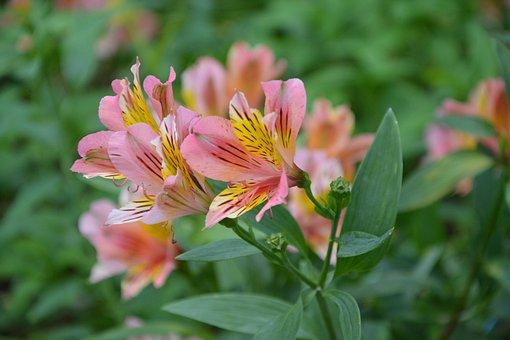 Flower, Flowers, Yellow Rose, Plants Flowering, Nature