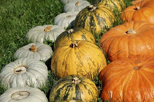 Pumpkins, Colorful, Autumn, Decoration, Pumpkin