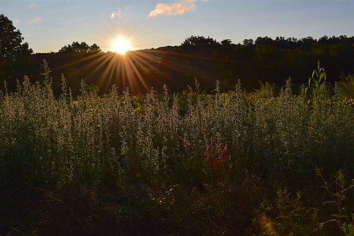 Field, Sunrise, Grass, Green, Landscape, Sky, Nature