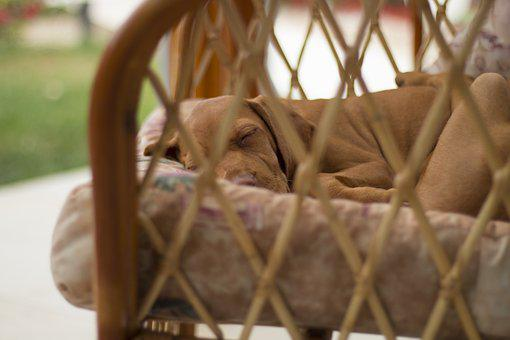 Dog, Sleep, Recreation, Armchair, Garden