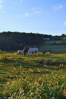 Horses, Sunrise, Grass, Farm, Landscape, Field, Summer