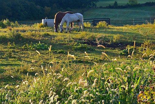 Field, Morning, Horses, Nature, Summer, Landscape