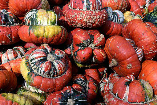 Pumpkin, Gourd, Bishop's Cap, Autumn, Thanksgiving