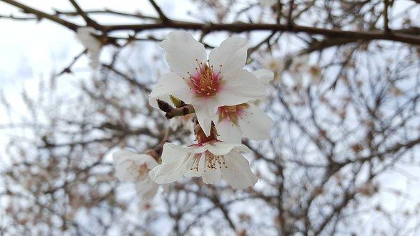 Flowers, White, Beauty, Nature, Tree, Plant, Decoration