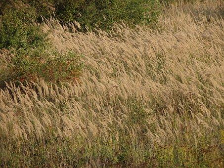 Field, Spike, Wheat, Landscape, Yellow, Autumn