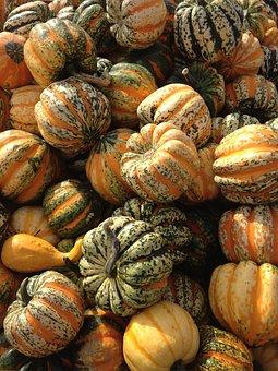 Squash, Fall, Autumn, Thanksgiving, Pumpkin, Orange