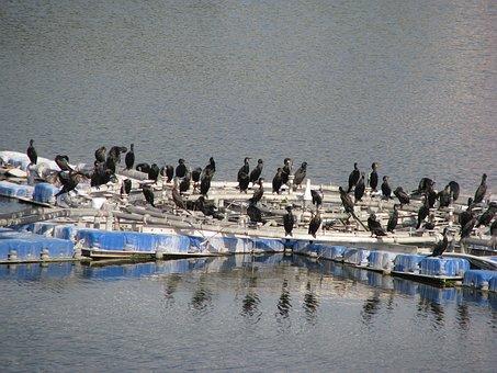 Crow, Water, Dam, Nature, Wild, Black, Wildlife, Bird