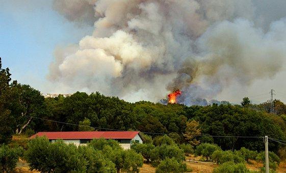Fire, Flames, Summer, Blaze, The Forest Fire